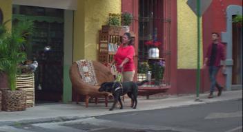 Señora caminando con su perro guía